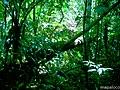 Bosque en la Finca Susun. - panoramio.jpg