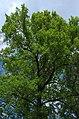 BotGardenFomin DSC 0270-1.jpg