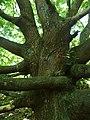 Botanical garden of the earth, entrance free - panoramio.jpg