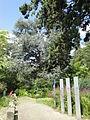Botanischer Garten Bern DSC04032.jpg