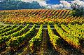 Bouillargues vignoble AOC Costières.jpg