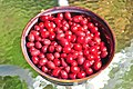 Bowl of ripe Cornelian Cherries 01.jpg