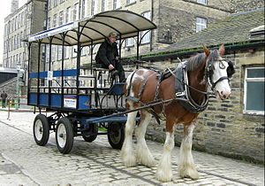 Harnessed dray horse with omnibus cart, at Bra...