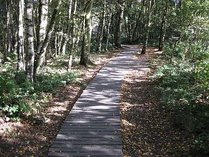Breary Marsh - Wooden walkway