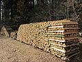 Brennholzstapel im Kleinprivatwald.JPG