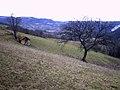 Brezovice - opština Valjevo - zapadna Srbija - panorama 10.jpg