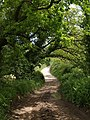Bridleway near Pruston Barton - geograph.org.uk - 1323358.jpg