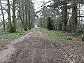 Bridleway running north to meet the High Weald Landscape Trail - geograph.org.uk - 1235945.jpg
