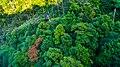 Broccoli Mountain - Flickr - mendhak.jpg