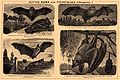 Brockhaus and Efron Encyclopedic Dictionary b34 610-1.jpg