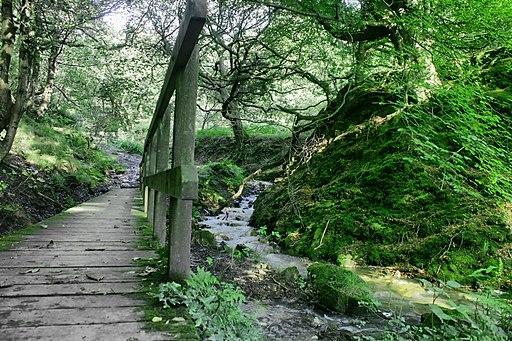 Brombil woods - panoramio (1)
