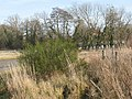 Broom on Lenham Heath Road - geograph.org.uk - 1140691.jpg