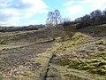 Broughton Down Nature Reserve - geograph.org.uk - 1739587.jpg
