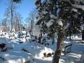 Bucuresti, Romania, Cimitirul Bellu Catolic (Zi de iarna foarte geroasa) (2) B-IV-a-B-20118.JPG