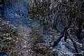 Bushfire (48921907996).jpg