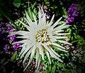 Butchart Gardens - Victoria, British Columbia, Canada (28561812563).jpg