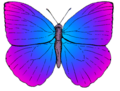 Butterfly top PSF artistic license.png
