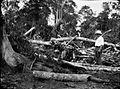 COLLECTIE TROPENMUSEUM Drie mannen bij gekapt oerwoud mogelijk voor de aanleg van een rubberplantage Oost-Sumatra. TMnr 60005309.jpg