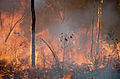 CSIRO ScienceImage 393 Fire in the Tropics.jpg