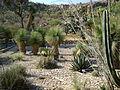 Cadereyta Botanical garden (5761469336).jpg