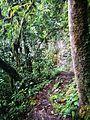 Camí entre les dues caigudes de la catarata de Gocta.jpg