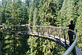 Capilano Suspension Bridge (7960610134).jpg