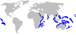 Range of the grey reef shark