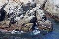 Carmel Point Lobos 20.JPG