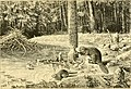 Castorologia, or The history and traditions of the Canadian beaver (1892) (20353744449).jpg