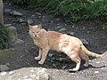 Cat 2 - panoramio.jpg