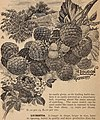 Catalogue and price-list of fruits and ornamentals (1895) (20576632362).jpg