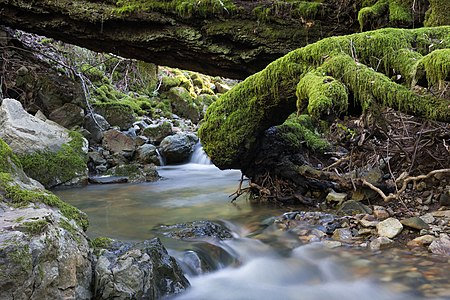 Cataract Creek, Mount Tamalpais State Park, Marin County, California
