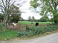 Cattle at Dunlough, Co. Meath - geograph.org.uk - 593133.jpg