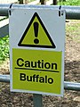 Caution Buffalo - geograph.org.uk - 806385.jpg