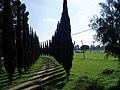 Cedros guardianes - panoramio.jpg
