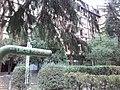Cerak vinogradi (18.11.2018), ulica Kedrova 02.jpg