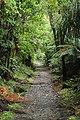 Charming Creek Walkway.jpg
