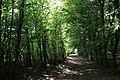 Chemin forestier à Behonne.jpg