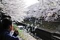 Cherry blossom near Zenpukuji river, Tokyo; March 2008 (19).jpg