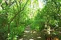Cheyne Walk woodland, Grange Park - geograph.org.uk - 68797.jpg