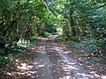 Chithurst Lane, Surrey - geograph.org.uk - 212606.jpg
