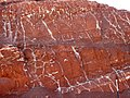 Chugwater Formation (Upper Triassic; Route 28 roadcut at Red Canyon, Wind River Range, Wyoming, USA) 13.jpg