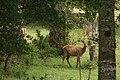 Ciervos de Reserva 2 - Omar Burgos D.jpg