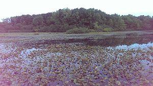 Staten Island Greenbelt - Clay Pit Ponds
