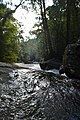 Clear water stream in Singharaja- Deniyaya 2.jpg