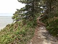 Cliff-side Path, Brownsea Island - geograph.org.uk - 1575438.jpg