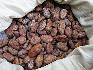 Risultati immagini per cocoa