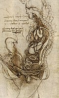 Coition of a Hemisected Man and Woman.jpg