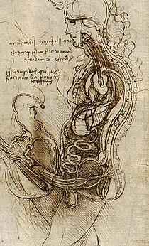 Coition of a Hemisected Man and Woman (c. 1492) adalah sebuah interpretasi pelukis tentang apa yang terjadi dalam tubuh selama coitus, oleh Leonardo da Vinci