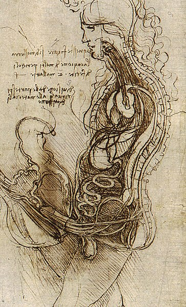 Coition of a Hemisected Man and Woman, Image by Leonardo da Vinci